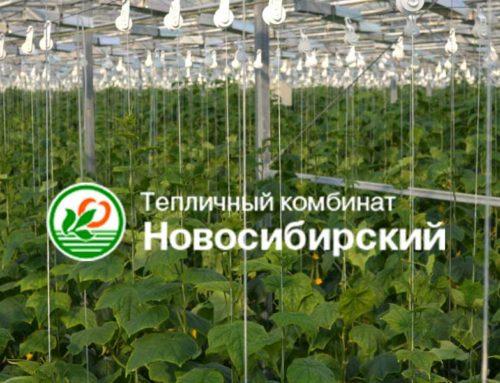 Тепличный комбинат «Новосибирский» внешнее электроснабжение