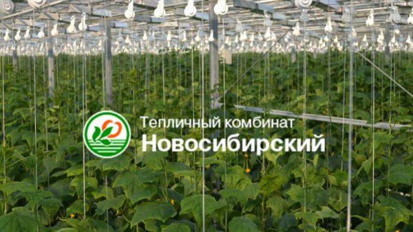 Тепличный комбинат «Новосибирский»
